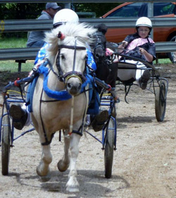 Mini trotter races at the show